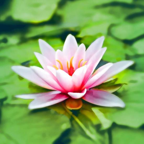 Stage Méditation Pleine Conscience de 5 jours